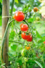 50m Pack of 8mm Natural Latex Gardening/ Household Elastic
